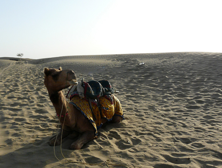 There are steps Pakistan's policymakers can take to tackle famine in the Thar Desert region.