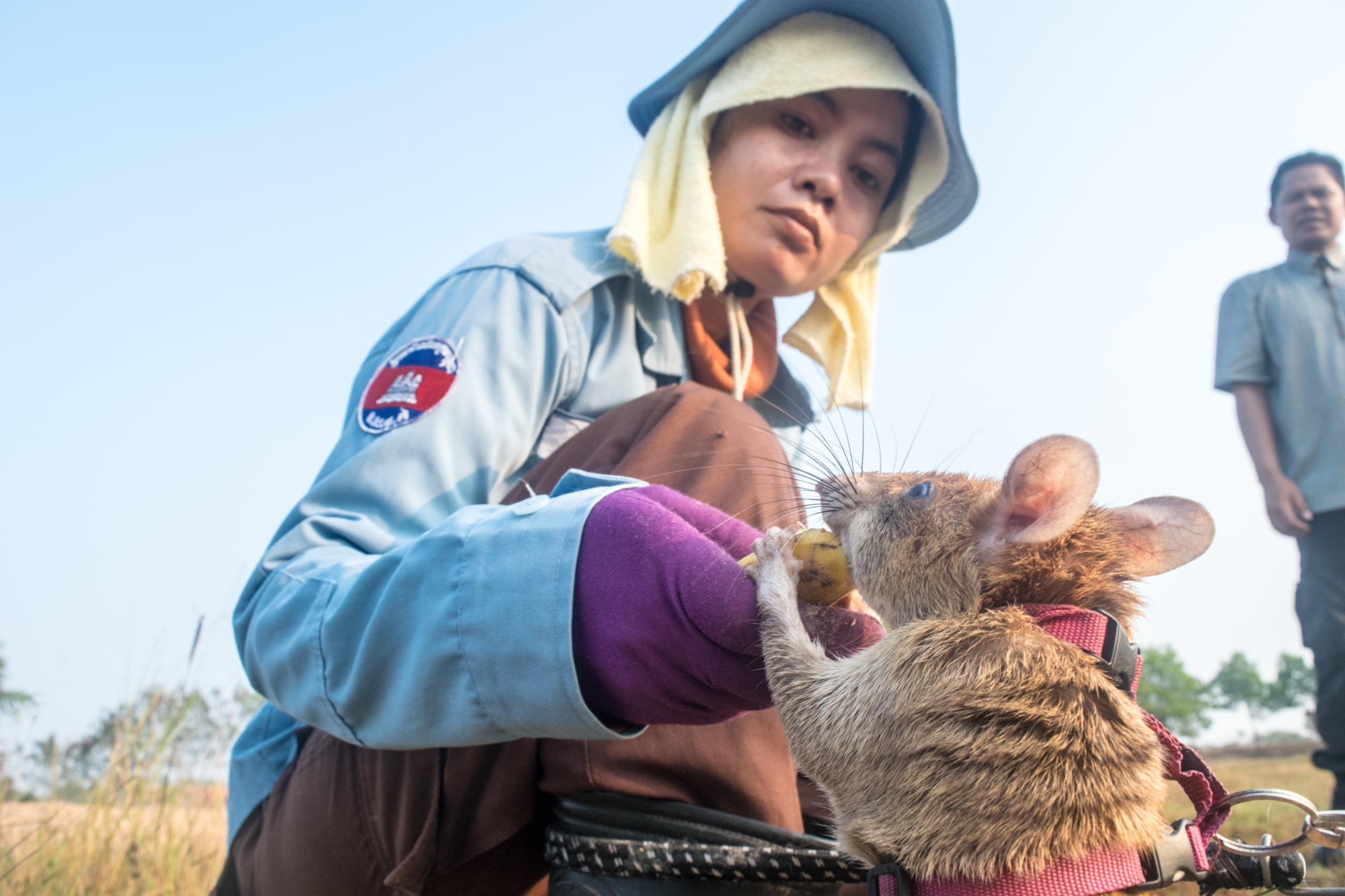 Cambodia's HeroRats. Image by Kingston Seinafo Feala / ARGUS.