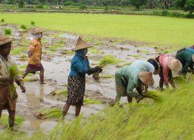 malaysia-crops-1800-bright