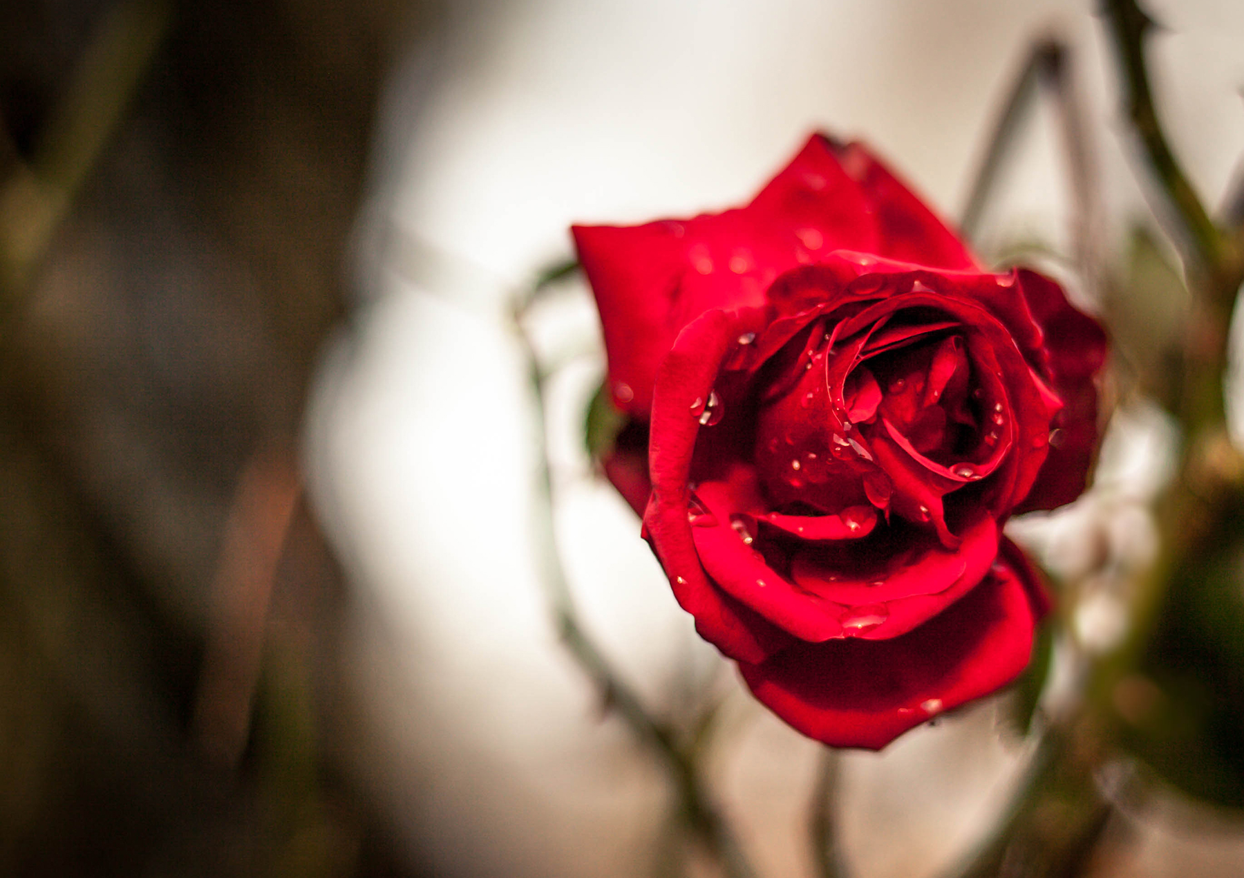 Love Hurts Environmental Risks In The Cut Flower Industry Policy