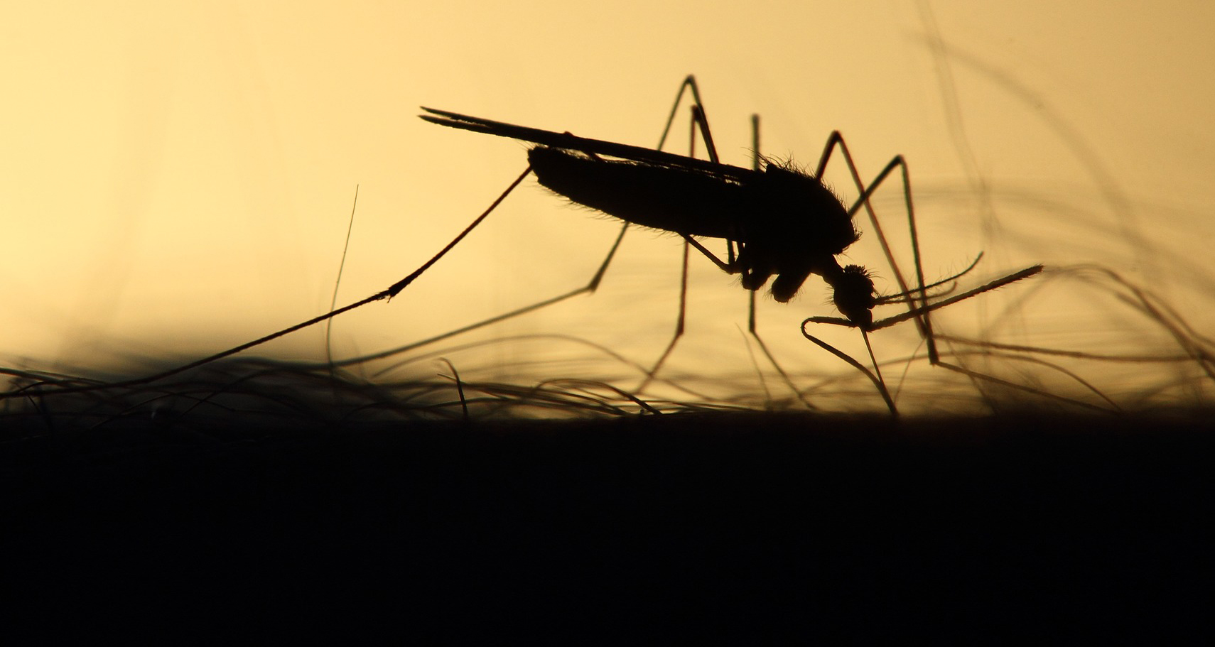 Can The World Find Refuge From Mosquitoes Policy Forum