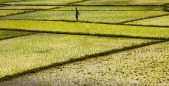 Is India's groundwater crisis a crisis of environment or a crisis of policy