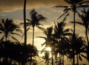 Silhouette of palm trees in a cloudy sunset
